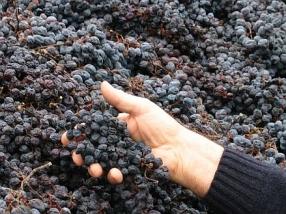 Weinreise: Valpolicella & Amarone